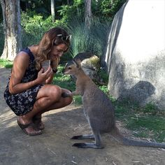 Getting a bit of wallaby time in at the Currumbin Wildlife Sanctuary on the Gold Coast. Baz the redneck wallaby! #australia #currumbinwildlifesanctuary #goldcoast #queensland #wallaby by smithygolf http://ift.tt/1X9mXhV