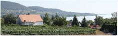 Kilátás a Balatonra. Badacsony - Lake Balaton - Hungary Bacchus, Apartments, Cabin, House Styles, Home Decor, Decoration Home, Room Decor, Cabins, Cottage