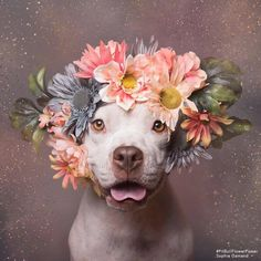 Sophie Gamand Photography is changing the perception of pit bulls with her ‪Pitbull Flower Power‬ project. Flower Power, Pit Bulls, Continental Bulldog, Power Animal, Dog Modeling, Pit Bull Love, We Are The World, Dog Photography, I Love Dogs