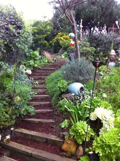 Garden Step Path up a hill On Rome St in SF CA - lots of succulents!