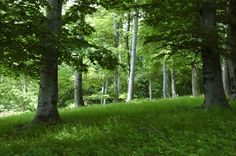 Male Karpaty Trunks, Plants, Drift Wood, Tree Trunks, Plant, Planets