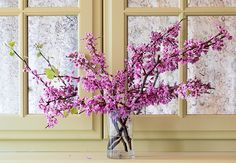 A large arrangement of delicate redbud branches shines in early spring.