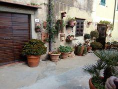 Capoliveri, Italia Plants, Italia, Planters, Plant, Planting