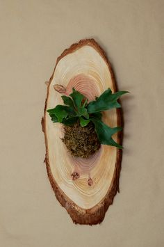 make_it_staghorn_fern_mounted-on_wood.jpg