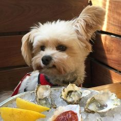 """""""Uhm, no thanks."""" Popeye missing out on Kumamoto oysters from MESSHALL in Los Feliz, Los Angeles."""
