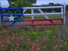 Yep...that's how you make a basic gate look good!  Love my Texas!