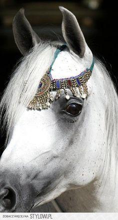 Arabian beauty Eye Study