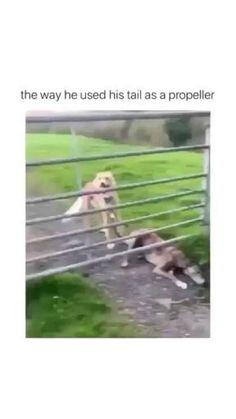 Funny Short Videos, Funny Video Memes, Really Funny Memes, Stupid Funny Memes, Dog Memes, Funny Relatable Memes, Haha Funny, Funny Cute, Hilarious