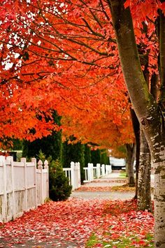 Red leaves Autumn fall. . love!! ♥♡