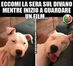 Funny Photos, Funny Images, Animals And Pets, Funny Animals, Funny Cute, Hilarious, Italian Lessons, Funny Test, Serious Quotes