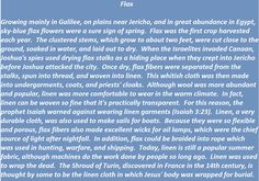 Flax in biblical times