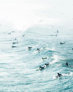 When surf is up...