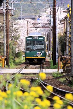 Randen railways, Kyoto, Japan 嵐電 桜のトンネル