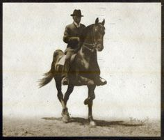 This photo of Rex McDonald was taken of him at age 22. George Ford Morris said Rex was not asked to do much, as he hadn't been ridden for a while, and it was not thought wise to heat him up. GFM described this as showing Rex at a slow rack.
