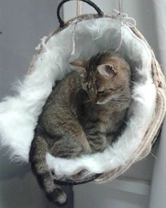 DIY catbed. Made this from a big basket, weeved a rope through the steel mesh inside the basket and sewed on a fake sheep skin rug, and hung it in the roof