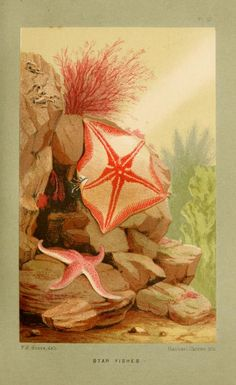 The aquarium: an unveiling of the wonders of the deep sea. - Biodiversity Heritage Library