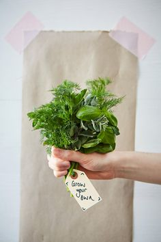 Few things will step up your cooking quite like always having fresh herbs to hand. Luckily, growing herbs is possible in or around almost any kitchen!