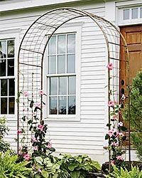 How to Choose Trellises and Supports for Climbing Plants