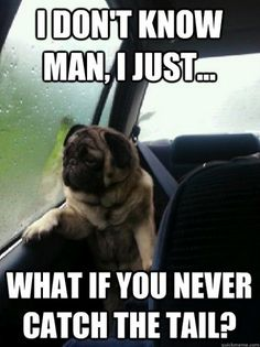 """A picture of a pug gazing out of a rain-misted car window quickly caught on as the """"Introspective Pug"""", and we've collected our 25 favorite examples."""