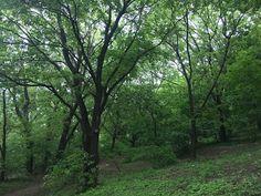 Jónak lenni...: A kislányom Apának szólított Trunks, Plants, Blog, Drift Wood, Tree Trunks, Blogging, Plant, Planets