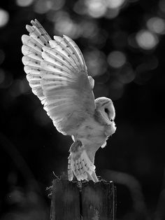 I adore owls. Nobody will understand my love for them.