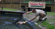 Thrilling discoveries await you at The St. Augustine Alligator Farm Zoological Park :)