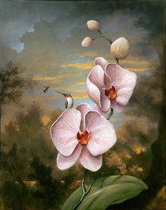 The Listener. (Art by Kevin Sloan. Botanical Drawings, Botanical Art, Illustration Botanique, Illustration Art, Afrique Art, Hummingbird Painting, Arte Floral, Art For Art Sake, Surreal Art