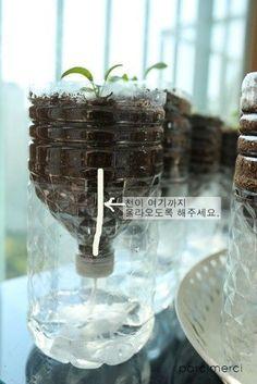 베란다 텃밭 - 업사이클링 페트병 자동급수 화분 만들기 : 네이버 블로그 Bottle Garden, Garden Pots, Growing Green Beans, Home Vegetable Garden, Garden Landscape Design, Urban Farming, Planting Flowers, Flowers Garden, Flower Pots