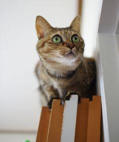 里親さんブログ中途半端は許さない&猫シェルターへ - http://iyaiyahajimeru.jp/cat/archives/65810