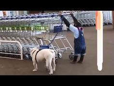 [HD] Monkey and Dog in Supermarket - 27