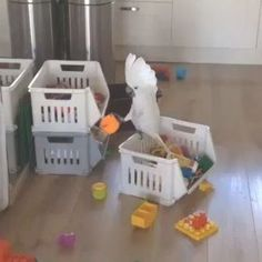 Parrot plays with my child's toolsYou can find Parrots and more on our website.Parrot plays with my child's tools Cute Little Animals, Cute Funny Animals, Funny Cute, Funny Birds, Cute Birds, Funny Animal Memes, Funny Animal Pictures, Animal Humor, Funny Humor