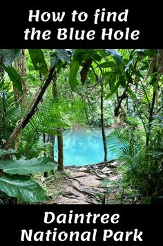 Roadtrip Australia, Visit Australia, Queensland Australia, Scuba Diving Australia, Motorhome Travels, Australian Road Trip, Daintree Rainforest, Road Trip Adventure, Cairns