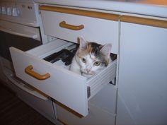 Bastet in a drawer