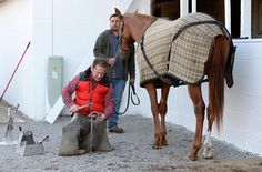 Is My Farrier a Biosecurity Risk?