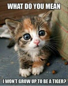 What? Cute cat / kitten :-)