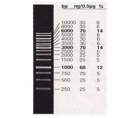 Marcador de Peso Molecular 1Kb - LGC Biotecnologia BioClassi
