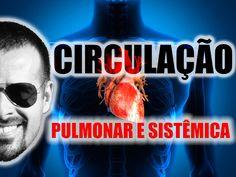 Vídeo Aula 004 - Sistema Circulatório: Circulação pulmonar e circulação ...