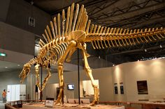 Enormous predator was over 9 feet longer than largest Tyrannosaurus Rex, the Spinosaurus. Scientist believed this to be the first semi-aquatic dinasour.
