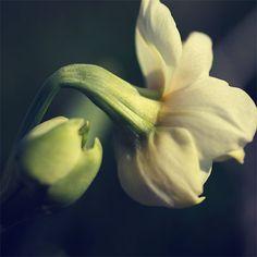 Wild Flower Photography. Original Fine Art Print by NatureCloseUp
