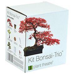 Plant Theatre Bonsai Trio Kit: Amazon.co.uk: Garden & Outdoors