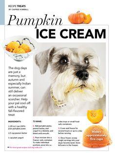 Pumpkin ice cream recipe for dogs (super easy!)