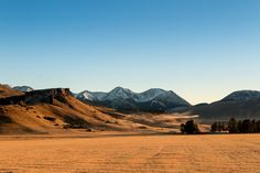 Castle Hill Sheep Station, Canterbury High Country, New Zealand