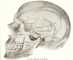 Halloween Skeleton Images -1893 Gray's Anatomy Illustrations - Knick Of Time