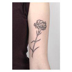 a little carnation