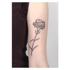 14 Meilleures Images Du Tableau Oeillet Carnation Flower Tattoo