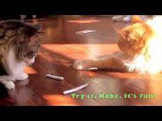 M Shares a Catnip Joint, at StarkRavingCat.com Videos