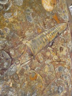 Fossiler Tisch - Durchmesser 60 cm - Alter 500 mio Jahre -  € 350.-