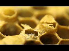 Je viens de mener une semaine « découverte » dans ma classe de SP, autour des abeilles (je précise que je suis à la 4ème période de mon année scolaire). Le sujet est parti d'un élève, qui avait apporté un petit pot de miel à l'école la semaine précédente....