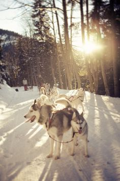 Go dog sledding in Alaska