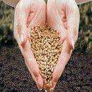 En Europa, el intercambio de semillas podría ser ilegal